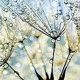 Artland Qualitätsbilder I Bild auf Leinwand Leinwandbilder Wandbilder 80 x 80 cm Botanik Blumen Pusteblume Foto Blau C6XW Pusteblume Blaue Diamanten