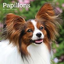 Suchergebnis Auf Amazonde Für Papillon Hund