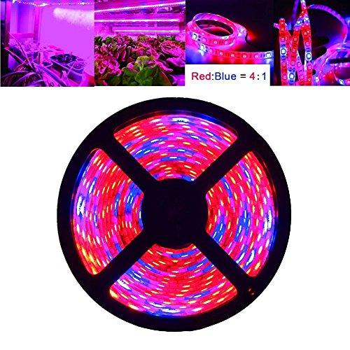 Betriebslichter, iNextStation 16.4ft / 5M LED Betriebslicht wachsen Streifen-Licht SMD 5050 wasserdicht wachsen Licht volles Spektrum-Seil beleuchtet rotes Blau 4: 1 für Aquarium Gewächshaus Wasserkulturanlage, Garten Blumen Veg wachsen helles DC 12V