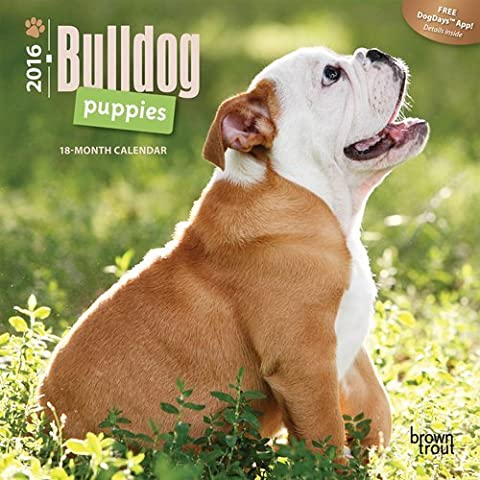 Bulldog Puppies 2016 Mini 7x7 by Browntrout Publishers (2015-07-15)