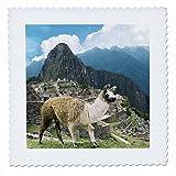3drose QS _ 87068Stange/Strebe _ 3Peru, Machu Picchu,