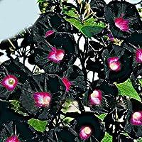 Amazones La Enredadera Jardín