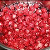 Piece Indische Erdbeeresamen Indische Erdbeere Bonsaipflanzen Duchesnea Indica, lndian Scheinerdbeere, Bonsai Fruchtsamen W078