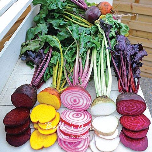 100pcs Multi-Farben Rübensamen Hardy Pflanzen Gemüsesamen Exotische Ziergemüse Bonsai Samen
