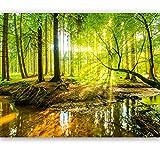 Fototapete Wald 366 x 254 cm Bäume Sonne Schlafzimmer Tapete inklusiv Kleister livingdecoration