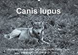 Wolfsblut (Wandkalender 2015 DIN A2 quer): Impressionen in schwarz-weiss aus dem Leben der Wölfe (Monatskalender, 14 Seiten)