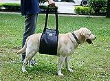 Harnais de soutien pour chien Harnais de réadaptation Harnais de réadaptation pour soulager les articulations Arthrite Blessures Faible Chiots séniors / jeunes avec poignée de mobilité pour aider l'aide, aider à marcher, escalader les escaliers, monter dans la voiture gris (L)