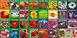 #10: KRIWIN® 30 Varieties Flower Seeds Combo 5220 plus seed