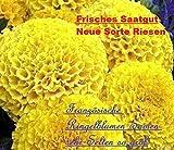 25x Französische Ringelblumen Riesen gelb Blumen Samen Blumensamen Pflanze selten Saatgut Garten Neuheit A1 #44