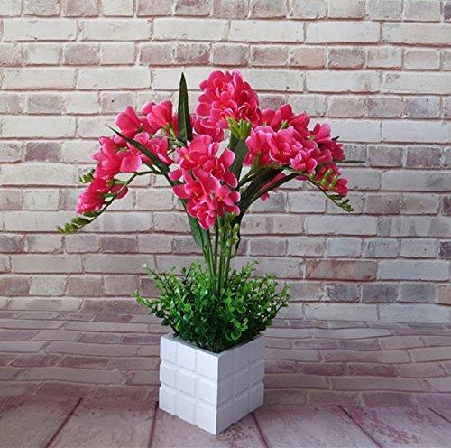 Schmetterlingsorchidee Home Schmetterlings-Orchidee
