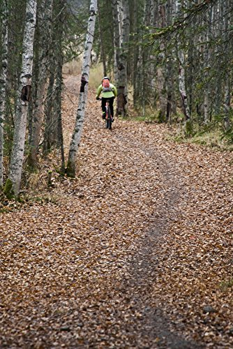 joe-stock-design-pics-woman-mountain-biking-on-a-leaf-covered-trail-amongst-birch-and-spruce-trees-a
