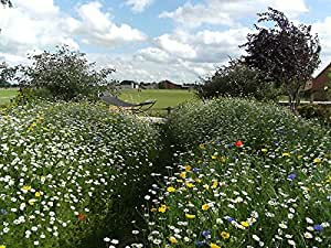 100% Wild flower basic meadow seed 90 grams. Native UK seed. Covers up to 60 square metres
