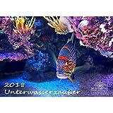 Premium Kalender 2018 · DIN A3 · Unterwasserzauber · Unterwasser · Tauchen · Fische · Meer · Edition Seelenzauber