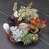 Kaktus & Sukkulenten Kollektion (10 Pflanzen)