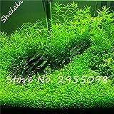 SwansGreen Große Förderung 1000pcs New Aquarium Gras-Samen (mix) Wasser Wasserpflanze Samen Familie Leicht Pflanzensamen 3