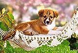 Mini - Puzzle 80 Teile - Hunde - Castorland / Tier Tiere Kinder Kinderpuzzle Minipuzzle Minipuzzles