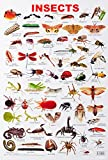 Insect Chart creates a visual impact on the minds of the children as well as the adults.