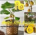 25x Gelbe Kiwi Selbst-befruchtend Samen Hingucker Pflanze Rarität #108 von Import - Handel Ipsa - Du und dein Garten