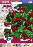 johnsons seeds - Pictorial Pack - Fiore - Knautia macedonica - 50 Semi