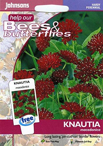 Johnsons Samen, Bildhaftes Paket Blume witwenblumen Knautia macedonica 50 Samen