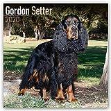 Gordon Setter 2020: Original Avonside-Kalender [Mehrsprachig] [Kalender] (Wall-Kalender)