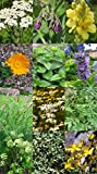 Saatgut Set: '12 traditionelle europäische Heilpflanzen', besondere Kräutersorten der Volksmedizin als Samen zur Anzucht für den Garten in schöner Geschenk-Verpackung -