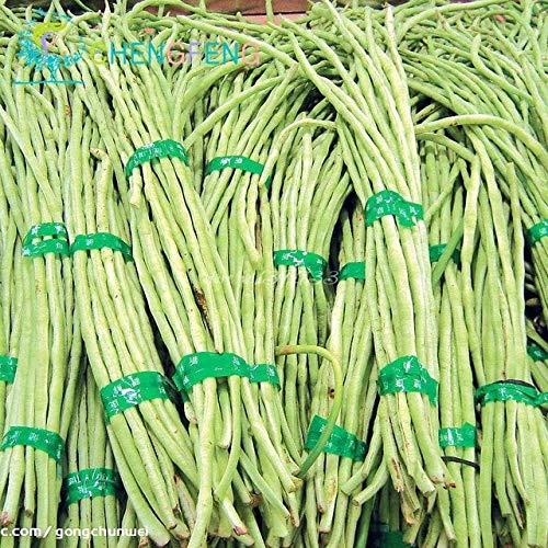 shopmeeko vendita calda!50 pz mix alta valore nutrizionale piselli pod vegetale facile da coltivare fagioli bonsai baccelli per cortile spedizione gratuita: grigio chiaro
