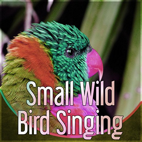 Spring with Birds Songs - Morning Song Wild Bird