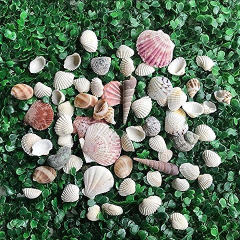 HAKACC Sea Shells Mixed Beach Seashells Approx. 56~70 Random Clams Snail Scallops