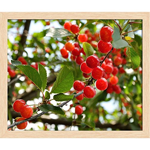 ArtzFolio Bright Red Cherries Canvas Painting Natural Brown Wood Frame 21.4 X 18Inch -