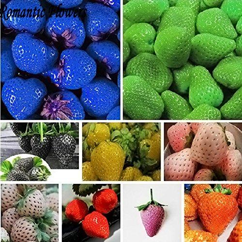 Sachet de 200 graines de fruits à planter, différentes variétés, fruits géants et de différentes couleurs