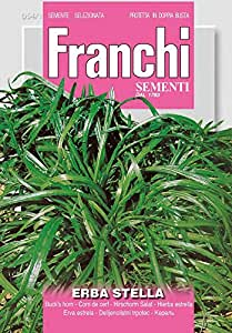 Salatsamen - Krähenfuß-Wegerich von Franchi Sementi