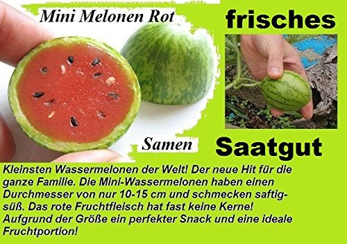 15x Mini Melonen Samen Saatgut Obst Pflanze Rarität essbar lecker Neuheit #135