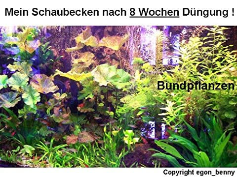 Hintergrundmix, 3 Töpfe Aquarienpflanzen, 3