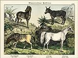 Posterlounge Holzbild 160 x 120 cm: Zebra, Quagga, Esel und arabisches Pferd von Fotofinder.com
