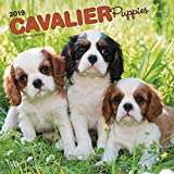 Cavalier King Charles Spaniel Puppies - Cavalier King Charles Spaniel Welpen 2019 - 18-Monatskalender mit freier DogDays