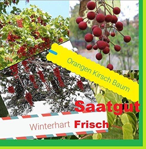 25x-naranjas-cereza-arbol-semillas-simiente-fruta-planta-arbol-rareza-comestible-delicioso-jardin-za