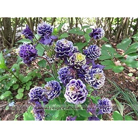 1bag = 100pcs RARO semillas de la hierba salvaje gota de rocío exótica japonesa Mini colgar verdes semillas de la hierba en maceta bonsai hogar y jardín