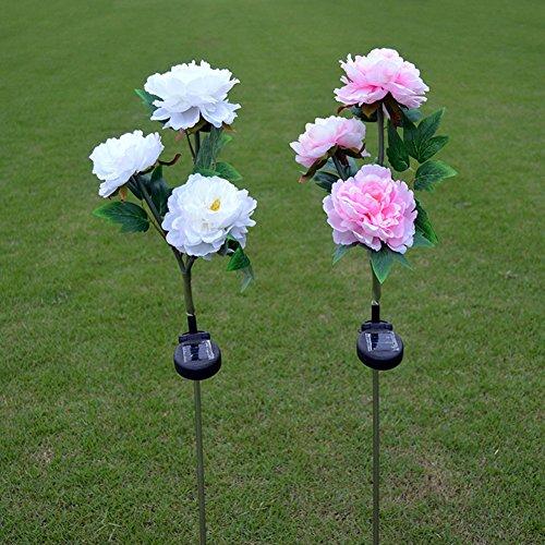 BLH Lumières solaires extérieures de Fleur de pieu de Jardin de Pivoine légère Solaire pour la décoration de Maison de pelouse de Jardin de Jardin