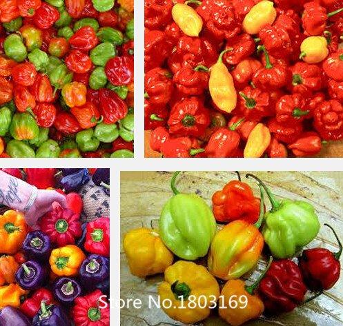 2016 vente chaude !! 100 graines / sac Peppers Ghost Chili rares Semis Bhut Jolokia Balcon Semences potagères pour les planteurs de fleurs en pot Mi