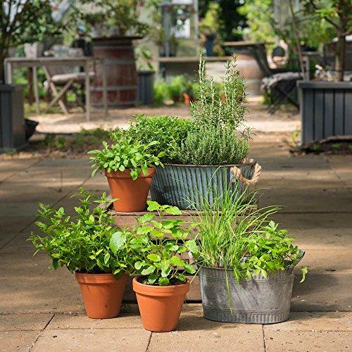 Kräuter-Pflanzen - Kleines Kräuter-Starter-Set - Enthält 8 Pflanzen zum günstigen Setpreis