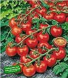 """BALDUR-Garten Veredelte Strauch-Tomate""""Sparta"""" F1"""