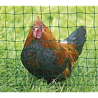 Kerbl Unisex's TR-CRL0770 Poultry Netting Non-electrifiable Double Prong, Clear, 112 cm x 50 m 13