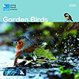 RSPB GARDEN BIRDS OFFICIAL 2018 CALENDAR SQUARE WALL NEW AND SEALED BY CAROUSEL