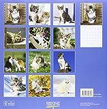 Image de Cats 2016: Broschürenkalender mit Ferienterminen