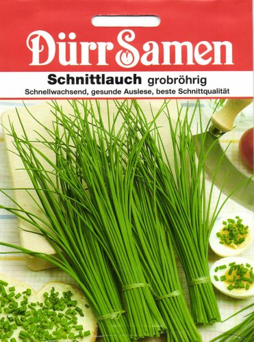 Dürr-Samen Schnittlauch grobröhrig