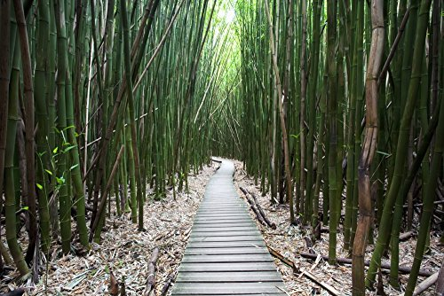 Jenna Szerlag/Design Pics - Hawaii Maui Kipahulu Haleakala National Park Trail Through Bamboo Forest on The Pipiwai Trail. Photo Print (96,52 x 60,96 cm)