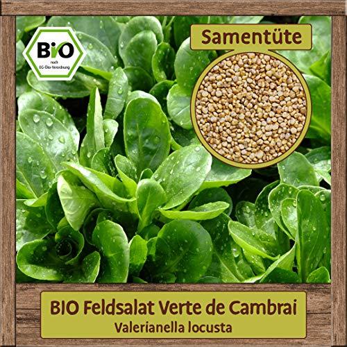Hochwertige BIO Samen Winter Saatgut Gemüse - Große Auswahl & viele Sorten - aus natürlichem Anbau - aus Europa, Sorte:BIO Feldsalat Verte de Cambrai