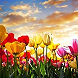 #10: Printelligent Wall Decor Canvas Painting(36 inch *36 inch)