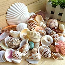 Topker 200g / pack Natural de la playa Shell y concha SeaShells Acuario Fish Tank Landscaping